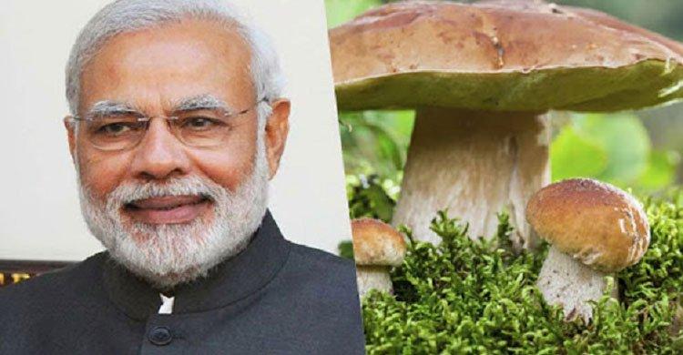 mushroom-modi-